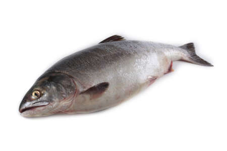 Photo pour Salmon isolated on white - image libre de droit