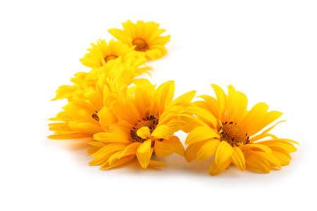 Photo pour Yellow chamomiles isolated on white - image libre de droit