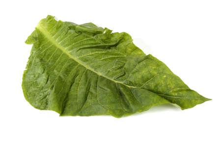 Photo pour Tobacco leaf isolated on white - image libre de droit