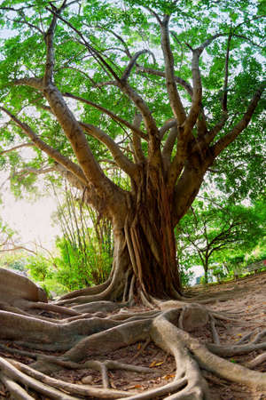 Photo for Tropical tree - Royalty Free Image
