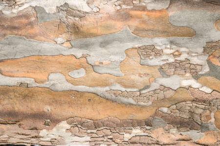Foto de Bark Tree Texture - Imagen libre de derechos