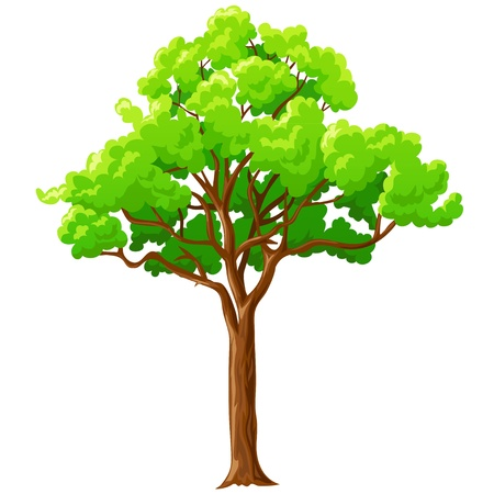 Illustrazione per Cartoon big green tree with branches isolated on white background. Vector illustration. - Immagini Royalty Free