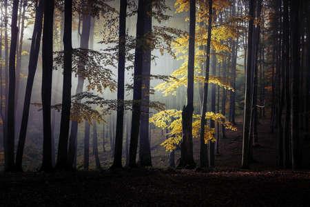 Autumn landscape of a beautiful forest