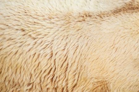 White polar bear fur texture