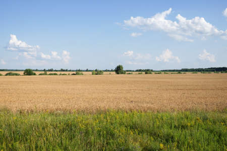 Photo pour Crops in scenic agricultural fields in summer. Picturesque blue sky over the village plain. Scenery. - image libre de droit