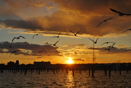 Photo pour View of New Bedford, MA at sunset with seagulls - image libre de droit