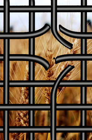 broken bars of proson with view to the field of wheat