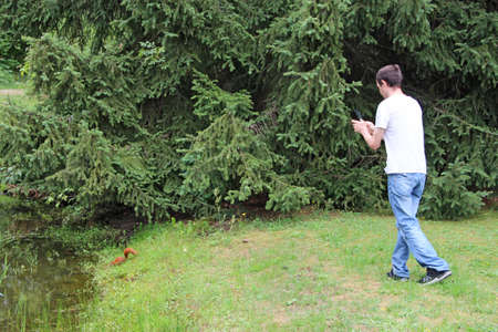 Photo for guy photographing squirrel in grass. Man making a photo of squirrel hiding in the spruce branches. Squirrel drinking water from pond in city park. Man making photo of red rodent on grass near pond - Royalty Free Image