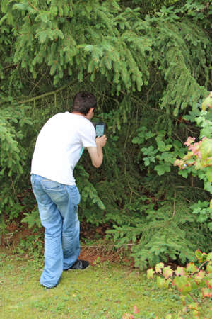 Photo for guy photographing squirrel in grass. Man making a photo of squirrel hiding between spruce branches. Squirrel living in city park. Man making photo of red rodent in green spruce branch - Royalty Free Image