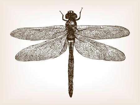 Ilustración de Dragonfly insect sketch style vector illustration. Old engraving imitation. Dragonfly insect hand drawn sketch imitation - Imagen libre de derechos