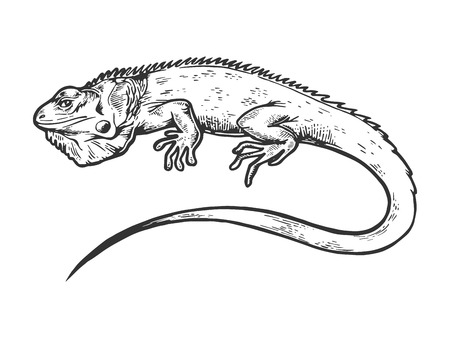 Illustration for Iguana animal engraving vector illustration. Scratch board style imitation. Black and white hand drawn image. - Royalty Free Image