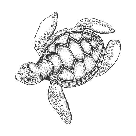 Illustration pour Turtle vector illustration. Scratch board style imitation. Hand drawn image. - image libre de droit