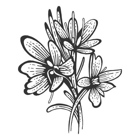 Illustration pour Saffron flower Crocus sativus spice sketch engraving vector illustration. Scratch board style imitation. Hand drawn image. - image libre de droit