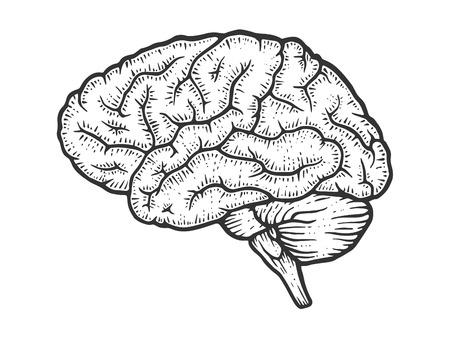 Illustration pour Human brain schematic vintage sketch engraving vector illustration. Scratch board style imitation. Black and white hand drawn image. - image libre de droit