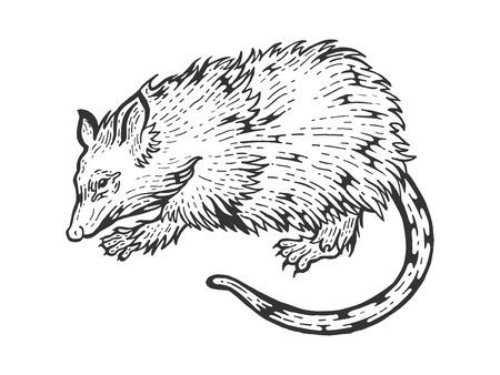 Illustration pour Opossum rat animal sketch engraving vector illustration. Scratch board style imitation. Black and white hand drawn image. - image libre de droit