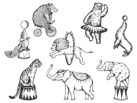 Photo for Retro circus animals performance set r sketch vector illustration. Old hand drawn engraving imitation. Human and animals vintage drawings - Royalty Free Image