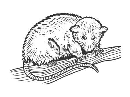 Illustration pour Opossum animal sketch engraving vector illustration. T-shirt apparel print design. Scratch board imitation. Black and white hand drawn image. - image libre de droit