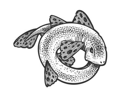 Photo pour shark catshark rolled in circle ring sketch engraving vector illustration. T-shirt apparel print design. Scratch board imitation. Black and white hand drawn image. - image libre de droit