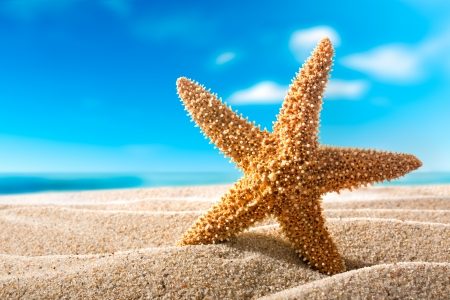 beautiful  fishstar on the sandy beach  Holiday concept