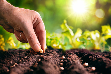 Photo for Farmer's hand planting seeds in soil - Royalty Free Image