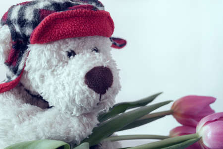 Photo pour A white Teddy bear in a red hat with crimson tulips. Greeting card concept - image libre de droit