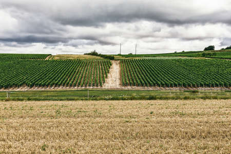 Grape lands in France, the nature of the northern Burgundy, the city of Chablis