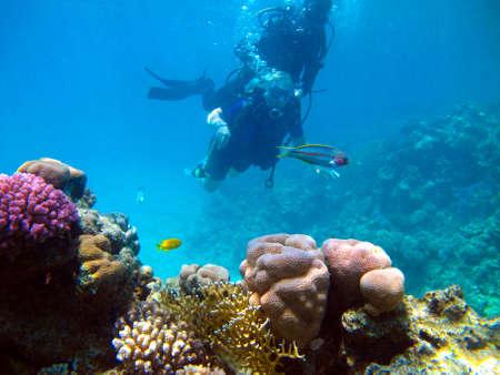 Photo pour Woman scuba diver and beautiful colorful coral reef underwater. - image libre de droit
