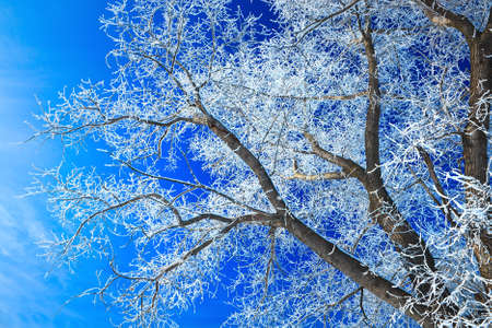 Trees covered with snow against the sky