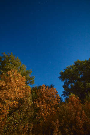 Yellowed autumn forest in the night starry sky. Photographed at the full moon.