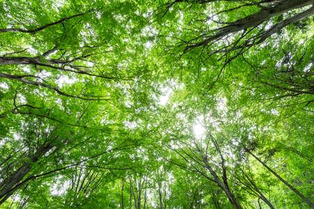 Photo pour Tree canopy, forest wide angle landscape - image libre de droit