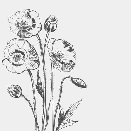Hand drawing of a flower - poppy. Light background dark pattern.