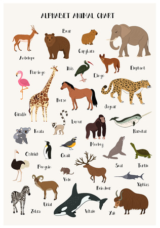 Alphabet animal chart set isolated vector illustration. ABC for kids education in preschool. Zoo animal alphabet chart with panda, urial, vole, reindeer, narwhal, dingo, seal, ibis, zebra, penguin.