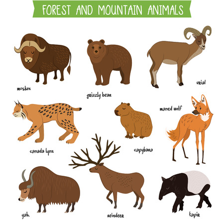 Illustration pour Forest and mountain animals set isolated vector illustration. Muskox, grizzly bear, urial, lynx, capybara, wolf, tapir, reindeer, yak in cartoon style. Forest and mountain wildlife animals collection - image libre de droit