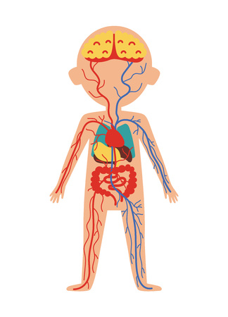 Illustration pour Boy body anatomy with internal organs. Health medical icon, human body physiology isolated on white background vector illustration. - image libre de droit