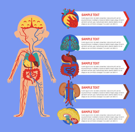 Illustration pour Health medical poster with human body anatomy. Kidney, lung, liver, heart, stomach, brain, intestine vector illustration. Internal organs of boy, human body physiology systems infographics. - image libre de droit