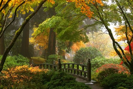 Fog and Fall Foliage in the Japanese Gardens
