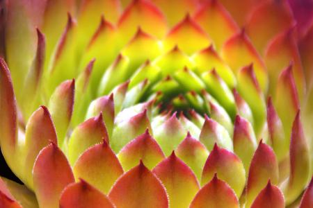 Patterns of a Succulent Plant