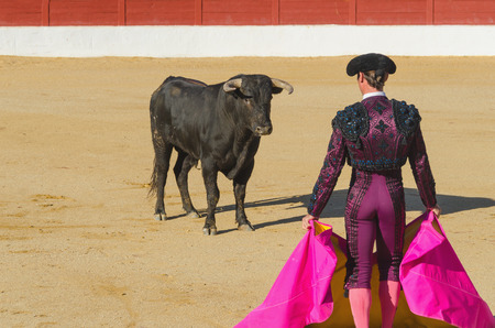 A bullfighter in front of the bull in an spanish bullfighting