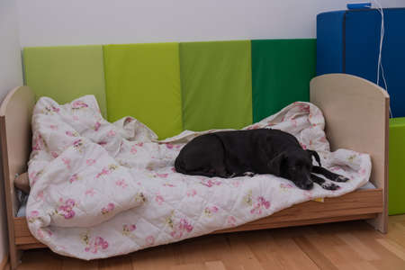 black dog lies in a childs bed - favorite place nursery