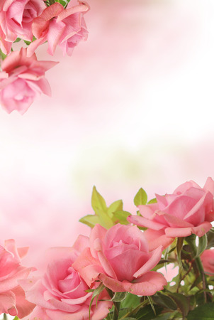Photo pour card with pink roses - image libre de droit