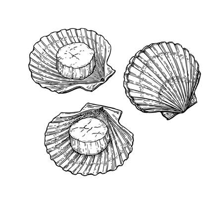 Illustration pour Scallops set. Seafood ink sketch. Isolated on white background hand drawn vector illustration retro style. - image libre de droit