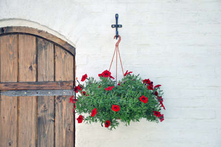 Photo for Petunia. Hanging flower pot with flowers at the entrance to the room. Design - Royalty Free Image