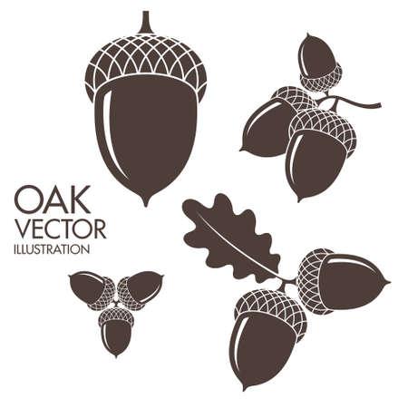 Illustration pour Oak. Isolated acorns on white background - image libre de droit