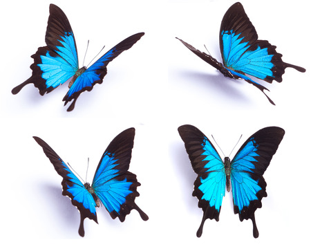Photo for Blue and colorful butterfly on white background - Royalty Free Image