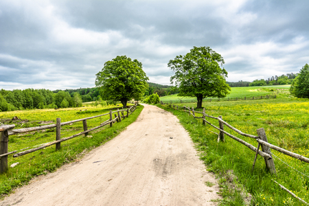 Photo pour Rural road on farm with green field, summer landscape - image libre de droit
