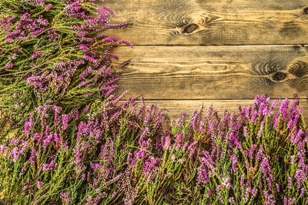 Heather flowers on wooden background, autumn flowers frame