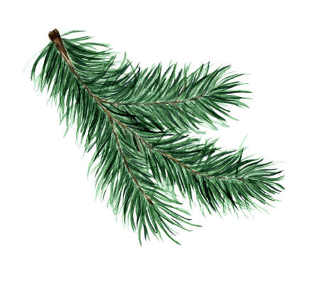 Illustration pour Green fluffy branch of spruce, pine, fir. Pine, fir branch for Christmas, New Year illustration. Watercolor isolated on white background. Drawn by hand. - image libre de droit