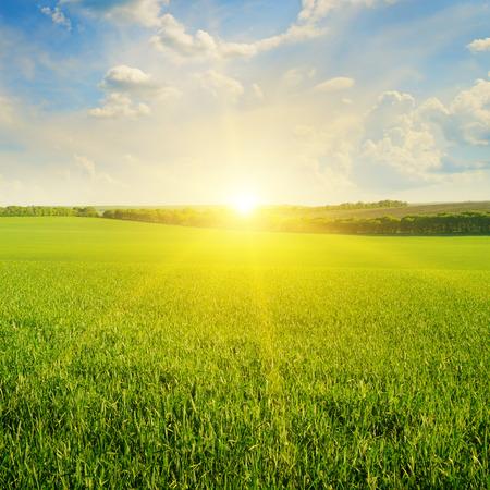 Photo pour field, sunrise and blue sky - image libre de droit