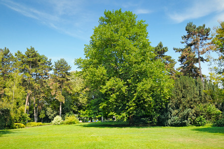 park, green meadow and blue sky