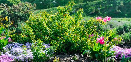 Photo for Beautiful flower bed with the first spring flowers. Wide photo. - Royalty Free Image